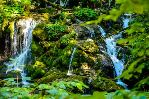 Living stream
